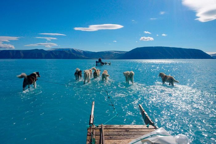 Sled dogs traversing through melted water atop an ice sheet in Greenland.